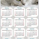 2020 Magnetic Calendar - Calendar Magnets - Today is My Lucky Day - Cat Themed 1