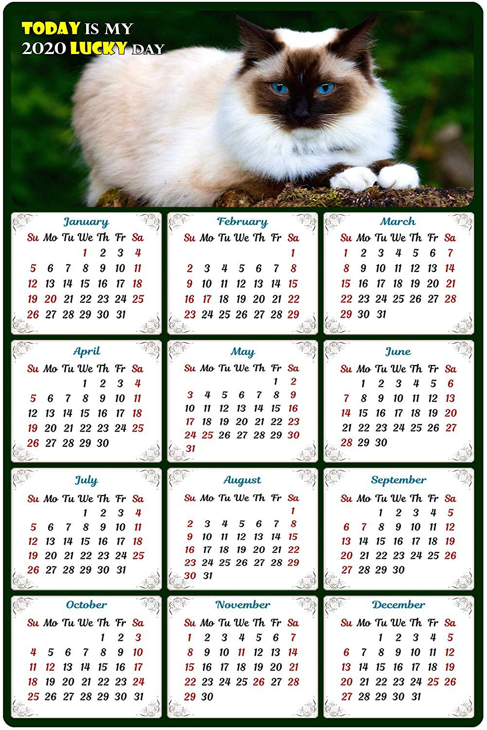 2020 Magnetic Calendar - Calendar Magnets - Today is My Lucky Day - Cat Themed 2