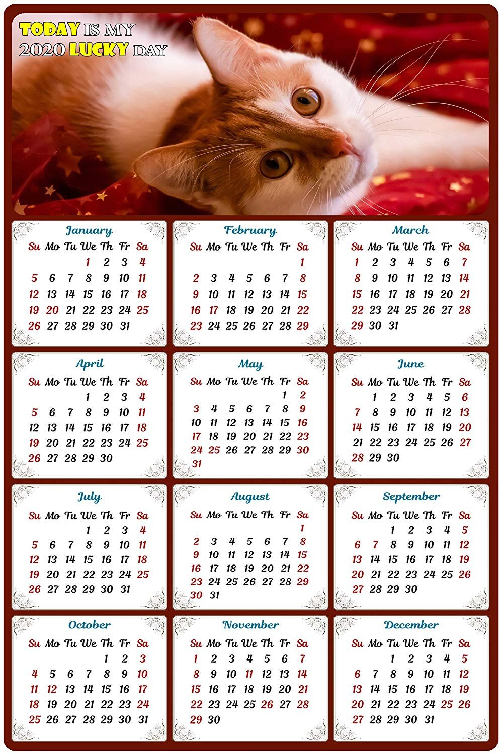 2020 Magnetic Calendar - Calendar Magnets - Today is My Lucky Day - Cat Themed 7