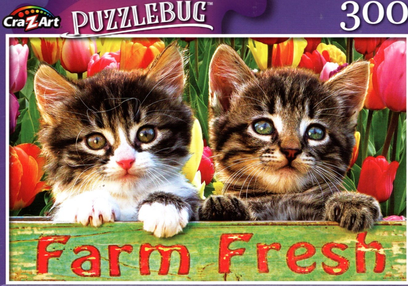 Tabby Kitten Friends - 300 Pieces Jigsaw Puzzle