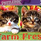 Tabby Kitten Friends - 300 Pieces Jigsaw Puzzle