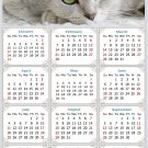 2021 Magnetic Calendar - Calendar Magnets - Today is My Lucky Day - Cat Themed 1 (5.25 x 8)