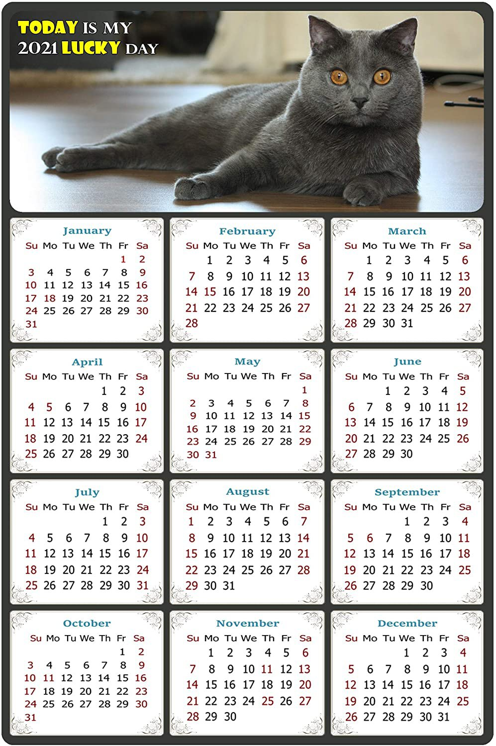 2021 Magnetic Calendar - Calendar Magnets - Today is My Lucky Day - Cat Themed 014 (7 x 10.5)
