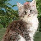 Kitten Cuddles 2021 - 2022 3.5 x 6.5 Inch Two Year Monthly Pocket Planner