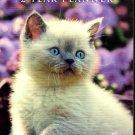 Kittens 2022 - 2023 2 Year Pocket Planner / Calendar / Organizer - Monthly Page Format