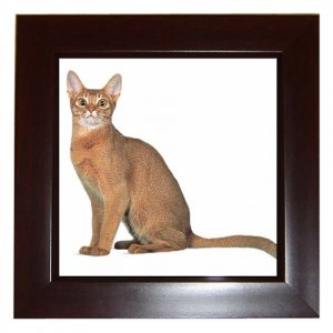 Abyssinian Cat Pet Lover Framed Tile Picture 12168361