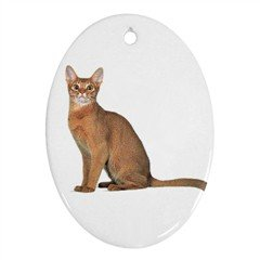 Abyssinian Cat Pet Lover Ornament Oval 12168365