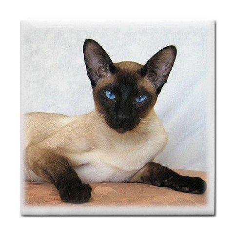 Siamese Cat Pet Lover Tile Coaster 12203163