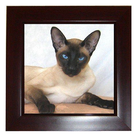 Siamese Cat Pet Lover Framed Tile Picture 12203164