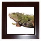 Iguana Lizard Reptile Pet Lover Framed Tile Picture 12239833