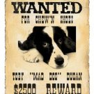Custom Pet WANTED POSTER with YOUR pet's photo  8x10 emailed to you