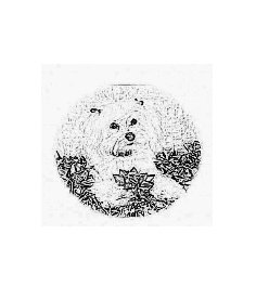 Custom Pet SKETCHED with YOUR pet's photo  8x10 emailed to you