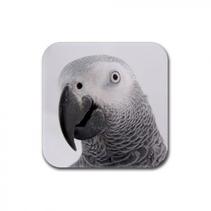 AFRICAN GREY Bird Pet Lover Rubber Square Coaster 4 pack 17476841