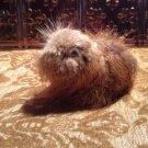 funny novelty gift beaver fur stuffed animal gag gift googly eyes