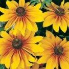 GLORIOSA DAISY FLOWERS 100 FRESH SEEDS