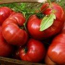 25 HEIRLOOM BRANDYWINE RED FRESH TOMATO SEEDS