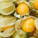 CAPE GOOSEBERRY SEEDS 100+ LARGE FRUIT berry seeds HUSK TOMATO Goldenberry