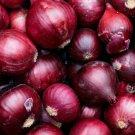ONION SEEDS 200+ RED BURGUNDY allium VEGETABLE GARDEN CULINARY