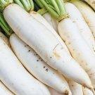 DAIKON RADISH SEEDS 200+ JAPANESE white RADISH garden VEGETABLE