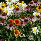 ALL PERENNIAL FLOWER SEED MIX 200+ CONEFLOWER daisy WILDFLOWER