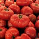VR MOSCOW TOMATO SEEDS 100+ DETERMINATE vegetable GARDEN cannin