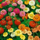 THUMBELINA ZINNIA FLOWER SEEDS 100+ GARDEN bees BIRDS ANNUAL
