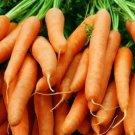 LITTLE FINGER BABY CARROT SEEDS 1000+ vegetable GARDEN culinary