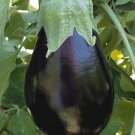 BLACK BEAUTY EGGPLANT SEEDS 100+ Vegetable GARDEN culinary COOKING