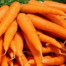 TENDERSWEET CARROT SEEDS 1000+ vegetable GARDEN culinary SOUPS