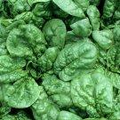 SPINACH SEEDS BLOOMSDALE 100+ vegetable garden LEAFY greens SALAD