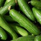 MUNCHER CUCUMBER SEEDS 30+ Vegetables GARDEN culinary PICKLING