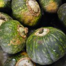 BUTTERCUP SQUASH SEEDS 15+ WINTER SQUASH Vegetable GARDEN culinary