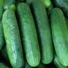 POINSETT 76 CUCUMBER SEEDS 50+ Vegetable GARDEN pickling SLICING