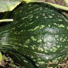 GREEN HUBBARD WINTER SQUASH SEEDS 15+ Vegetables GARDEN healthy