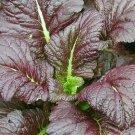 MUSTARD SEEDS 300+ GIANT RED HEAT TOLERANT healthy GARDEN greens