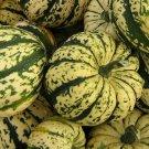 SWEET DUMPLING SQUASH SEEDS 20+ WINTER SQUASH Vegetables GARDEN