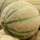 CANTALOUPE SEEDS HALES'S BEST JUMBO 50+ SUMMER garden VINE fruit