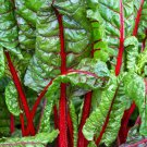 RUBY RED SWISS CHARD SEEDS 50+ heat tolerant SALAD GREENS garden