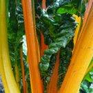 ORANGE SWISS CHARD SEEDS 50+ orange FANTASIA garden GREENS NON-GMO