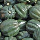 ACORN SQUASH SEEDS 20+ TABLE KING BUSH WINTER SQUASH Vegetable GARDEN culinary