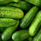 CUCUMBER SEEDS 50+ NATIONAL PICKLING Vegetable GARDEN pickling