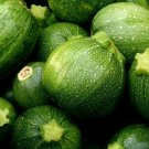 ROUND ZUCCHINI SEEDS 15+ SQUASH Vegetables COOKING culinary