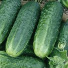 CAROLINA CUCUMBER SEEDS 50+ Vegetables COOKING culinary PICKLING