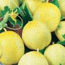 LEMON CUCUMBER SEEDS 30+ Vegetable GARDEN culinary SALAD pickling