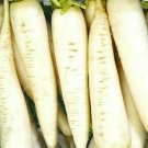 RADISH SEEDS 200+ WHITE ICICLE garden VEGETABLES culinary COOKING