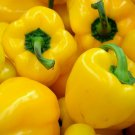 YELLOW BELL PEPPER SEEDS 30+ SWEET CANARY BELL PEPPER Non-Gmo