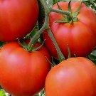 FLORADADE TOMATO SEEDS 100+ Vegetable GARDEN plants Culinary SAUCE
