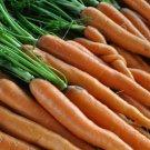 SCARLET NANTES CARROT SEEDS 1000+ vegetable GARDEN culinary SOUPS