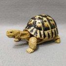 Dango Mushi Kame Turtle Greek Tortoise (Testudo graeca) Gashapon Figure Bandai