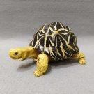 Dango Mushi Kame Turtle Indian Star Tortoise (Geochelone elegans) Gashapon Figure Bandai